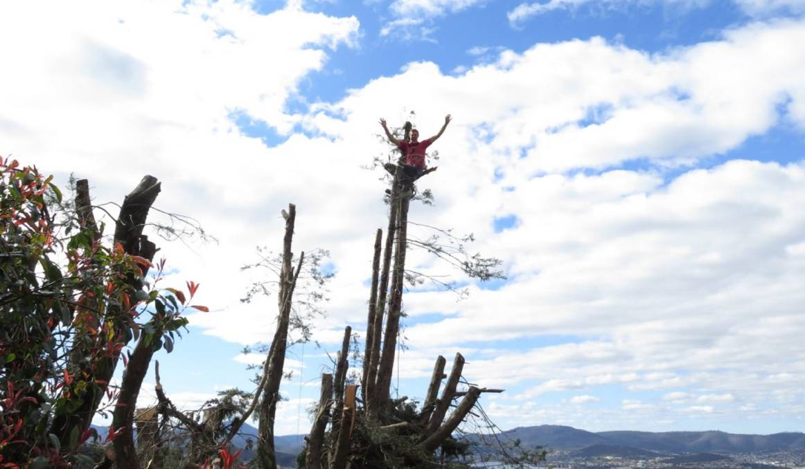 FLYING THE FLAG: The macrocarpa stump was destined for life as a treehouse complete with flagpole.