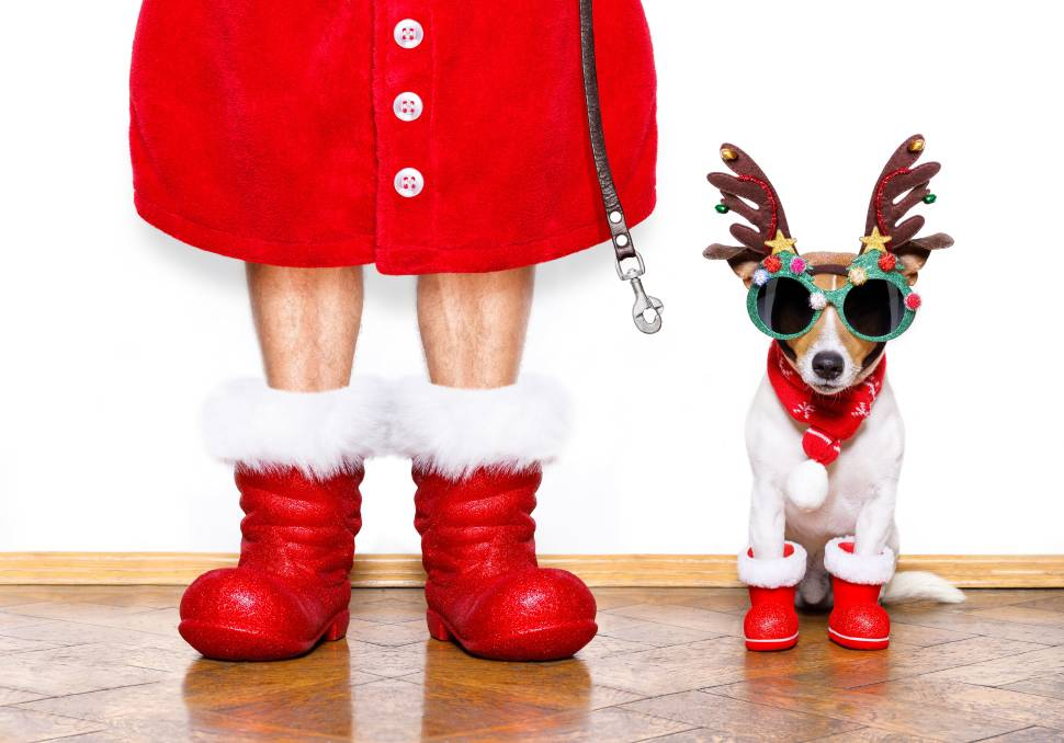 A Christmas gift guide for your pet | Trending