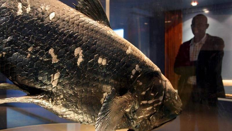 Coelacanths pregnant for 5 years: examine